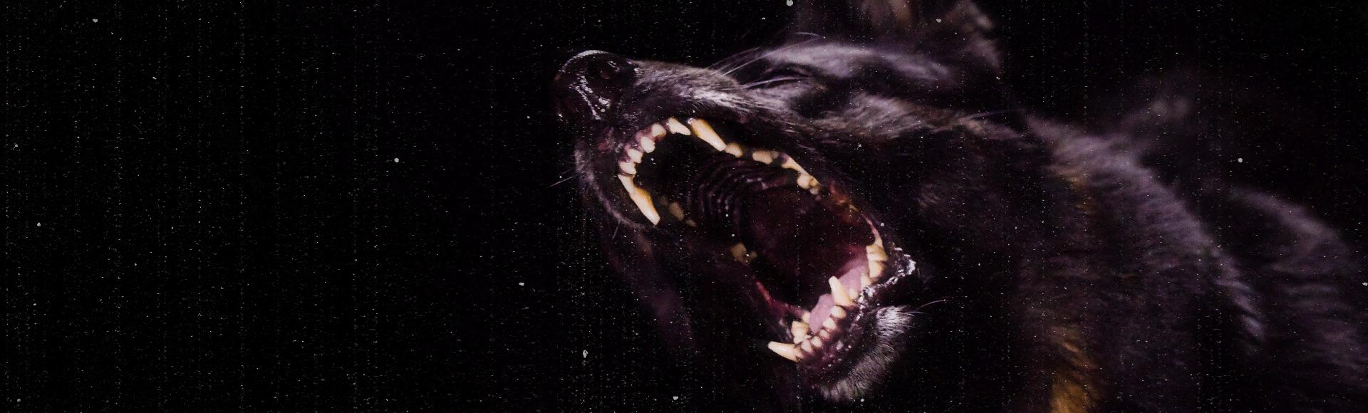 Bundle billboard of Alpha Dog