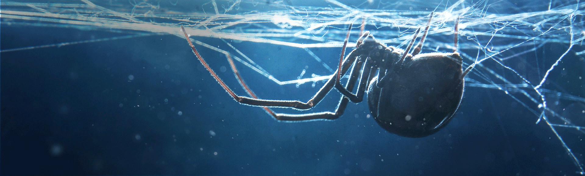 Bundle billboard of Arachnid