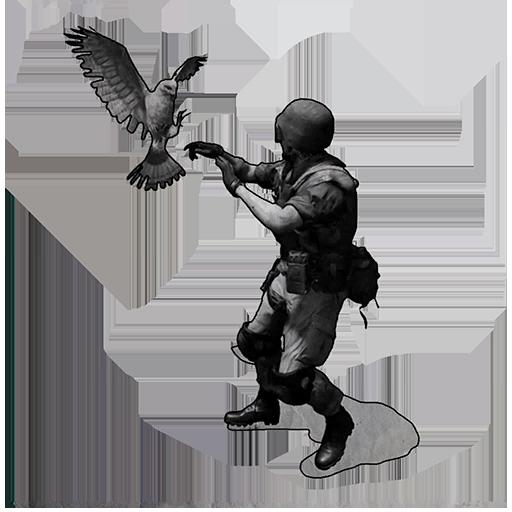 Image of Bird of Prey
